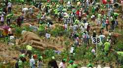 V Toyotini akciji pogozdovanja