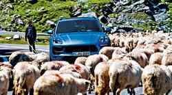Porsche Macan GTS in Porsche Cayenne GTS: Je lahko še bolje?