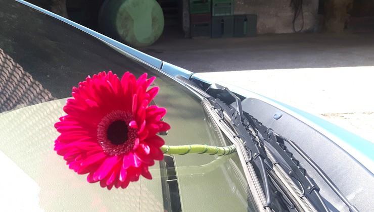Roža, ki bi me kmalu stala 620 evrov ali policista odslej čakam pripeta za volanom
